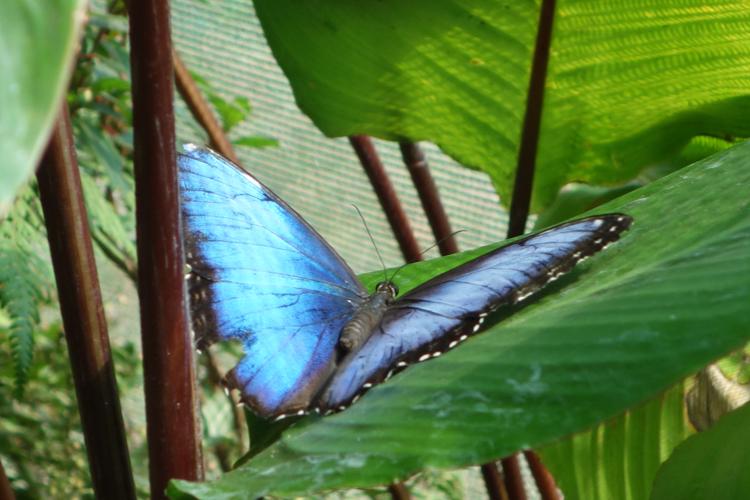 Dempsey - Costa Rica 2013